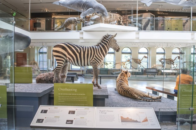Zebra in Age of Mammals