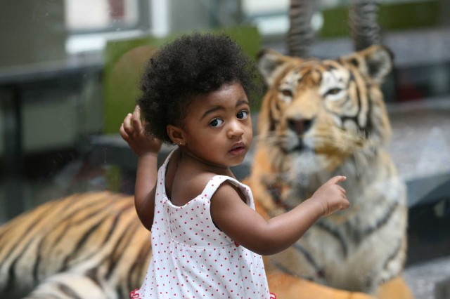 A little girl looks at a tiger