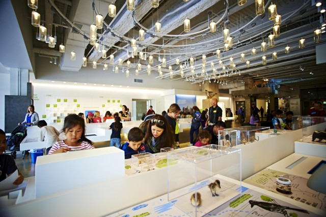 Kids and adults look closer at Nature Lab displays