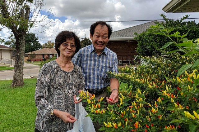 Two people picking chiles front plant