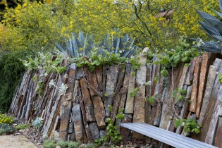 Image of living wall with bench and succulents