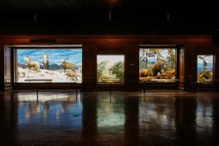 Mammals of North America dioramas