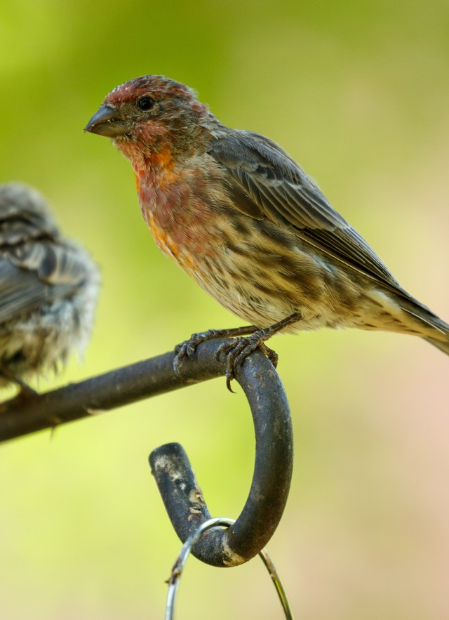 Close up of finches on a bird feeder