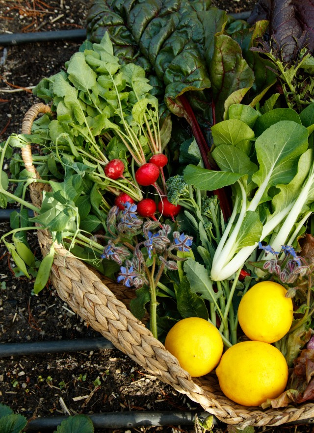 basket of produce from edible garden