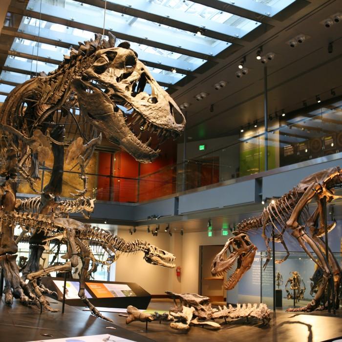 Photograph of dinosaurs on display at NHM