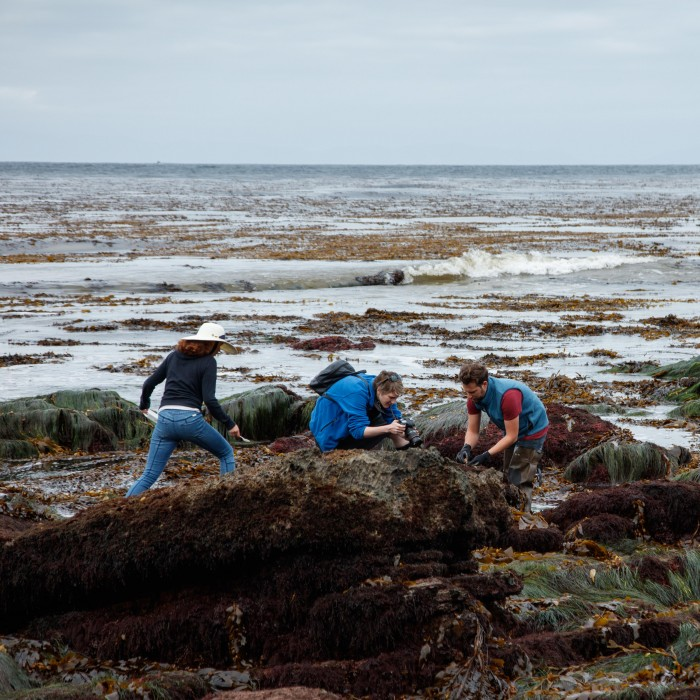 bioblitz near the ocean