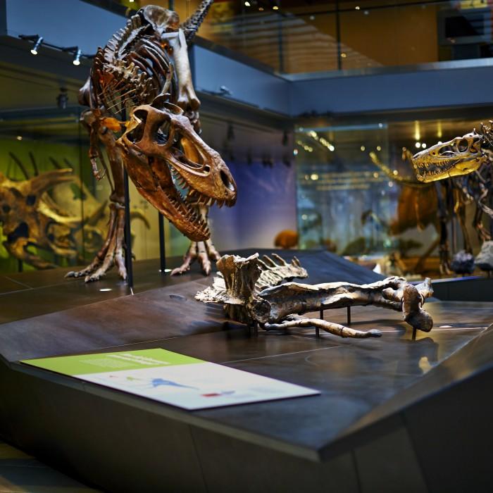 Photo of Dinosaur Hall
