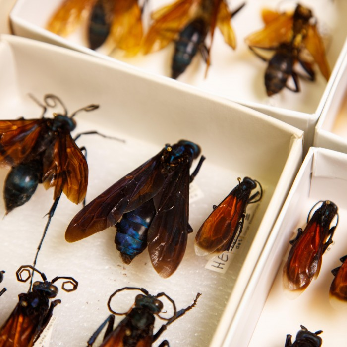 bug specimens research and collections