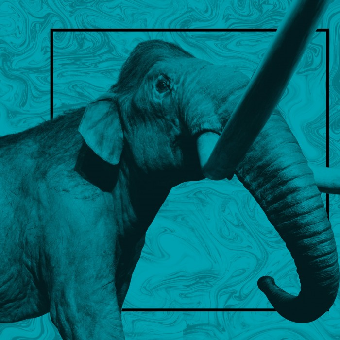 Art for La Brea Tar Pits Master Planning (Mammoth against blue background)