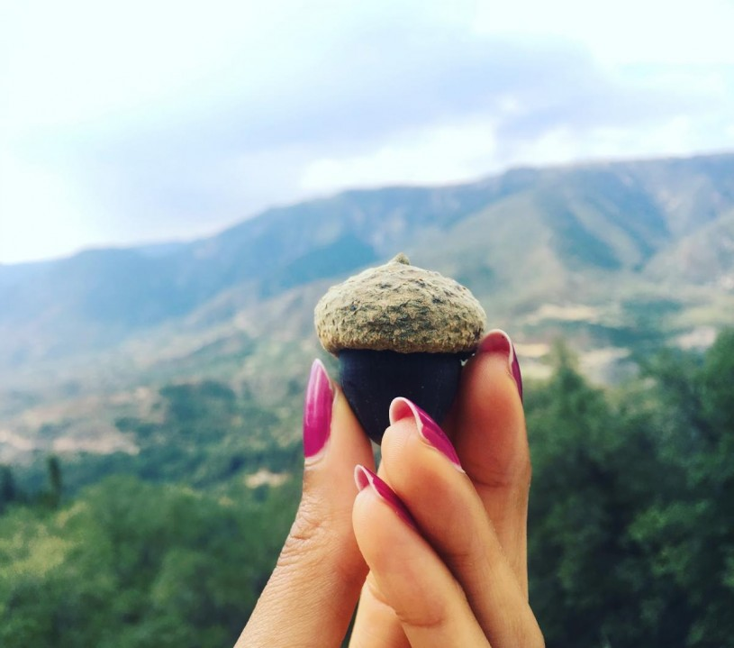 Iris loves acorns and what they represent: The humble beginnings of the oak and and still a major food source for the indigenous people who inhabit Southern California. Photo by Iris Hill