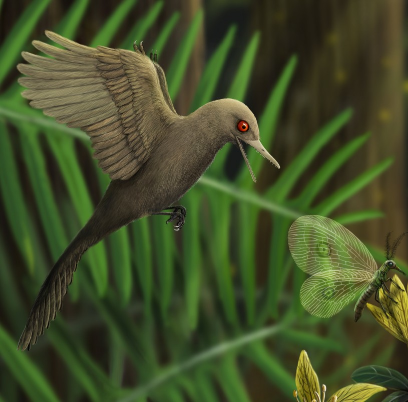 Oculudentavis hunting an insect