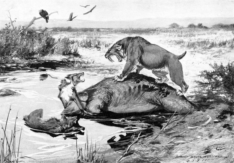 Smilodon californicus and Canis dirus fight over a Mammuthus columbi carcass in  La Brea Tar Pits