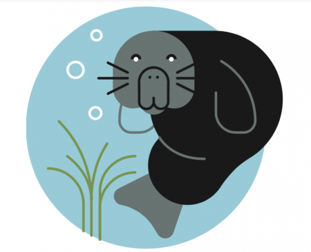 illustration of sea otter
